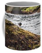 Cormorant - Montague Island - Australia Coffee Mug