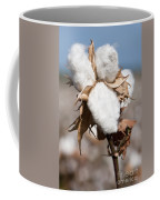 Cotton Bolls  Coffee Mug