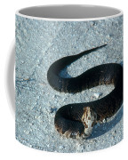 Cottonmouth Threat Display Coffee Mug