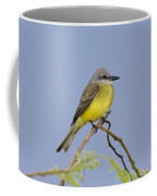 Couchs Kingbird Coffee Mug