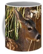 Coues White-tailed Deer - Sonora Desert Museum - Arizona Coffee Mug