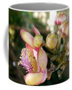 Couroupita Guianensis - Cannonball Tree Flowers Coffee Mug