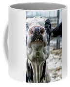 Cow Kiss Me Coffee Mug