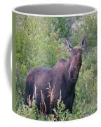 Cow Moose Portrait Coffee Mug