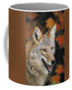 Coyote In Maple Coffee Mug