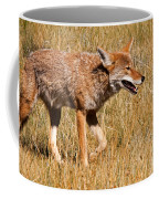Coyote In Rocky Mountain National Park Coffee Mug