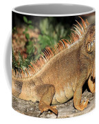 Cozumel Iguana Vacation Coffee Mug
