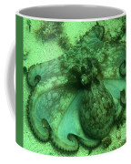 Cozumel Octopus Coffee Mug