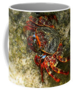 Crab In Cozumel Coffee Mug