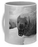 Crabeater Seal.. Coffee Mug