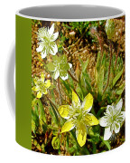 Cream Cups In Antelope Valley California Poppy Reserve Near Lancaster-california  Coffee Mug