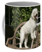 Cream Labradoodle On Wooden Chair Coffee Mug