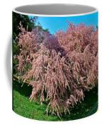 Crepey Myrtle Tree In Istanbul-turkey Coffee Mug