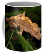 Crested Gecko Rhacodactylus Ciliatus Coffee Mug