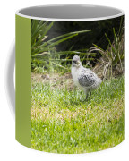 Crested Tern Chick - Montague Island - Australia Coffee Mug