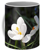 Crocus Flower Basking In Sunlight Coffee Mug by Elena Elisseeva