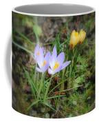 Crocuses In Bloom Coffee Mug