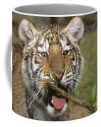Crosseyed Siberian Tiger Cub Endangered Species Wildlife Rescue Coffee Mug