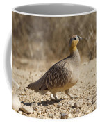 Crowned Sandgrouse Pterocles Coronatus Coffee Mug