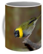 Cuban Melodius Finch Coffee Mug