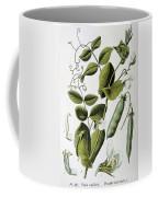 Culinary Pea Pisum Sativum Coffee Mug