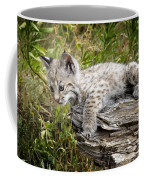 Curiosity Coffee Mug
