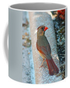 Curious Cardinal Coffee Mug