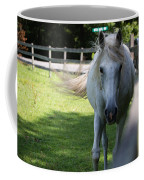 Curious Horse Coffee Mug