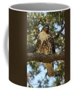 Curious Redtail Coffee Mug