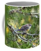 Curious Warbler Coffee Mug