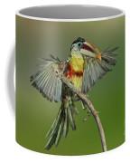 Curl-crested Aracari About To Perch Coffee Mug