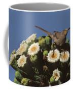 Curve-billed Thrasher Toxostoma Coffee Mug