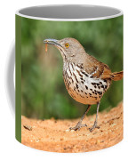 Curvedbill Thrasher With Grub Coffee Mug