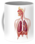 Cutaway Diagram Of Human Respiratory Coffee Mug