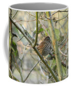 Cute Little Thrush Coffee Mug