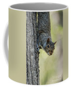 Cute Squirrel  Dare Me Coffee Mug