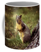 Cute Squirrel Coffee Mug by Robert Bales