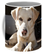 Cute White Dog Coffee Mug