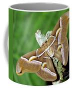 Cynthia Silkmoth Samia Cynthia Coffee Mug