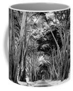 Cypress Tree Tunnel Point Reyes Coffee Mug