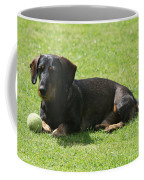 Dachshund Wants To Play  Coffee Mug
