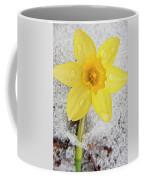 Daffodil In Spring Snow Coffee Mug