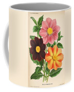 Dahlia Coccinea From A Begian Book Of Flora. Coffee Mug