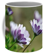 Daisies Seeking The Sunlight Coffee Mug