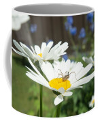 Daisies With Phalangiid Vistitor Coffee Mug