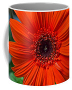 Daisy In Full Bloom Coffee Mug