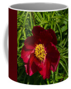 Deep Red Peony With Bright Yellow Stamens  Coffee Mug