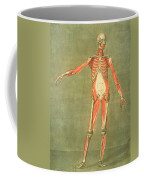 Deeper Muscular System Of The Front Coffee Mug