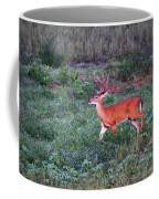 Deer-img-0113-001 Coffee Mug