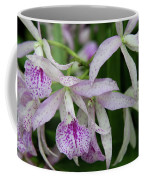 Delicate Orchid Blossoms Coffee Mug